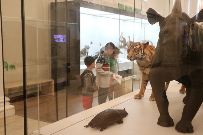 Museum Rhino