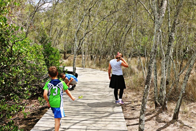 Bushwalks and the Mangrove Swamp