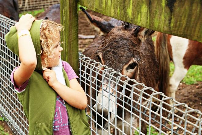 RJ Donkey.jpg