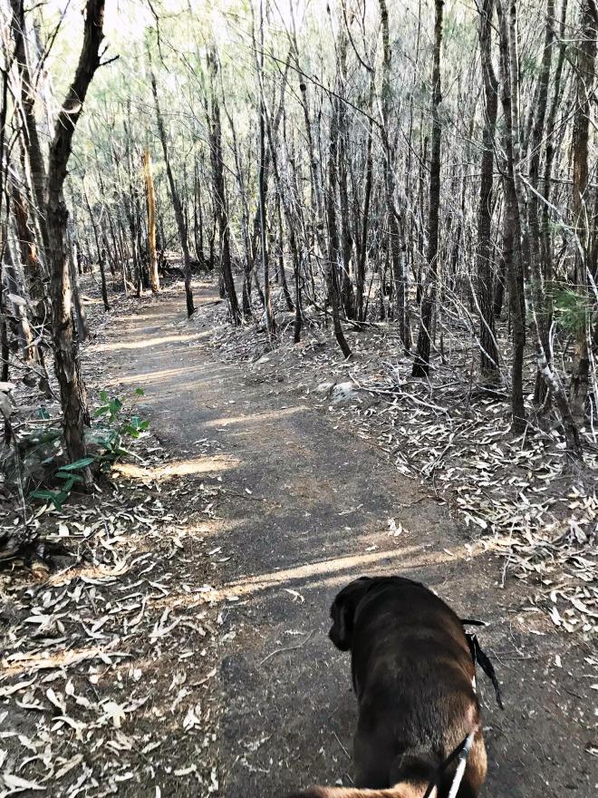 Darby Bushwalk