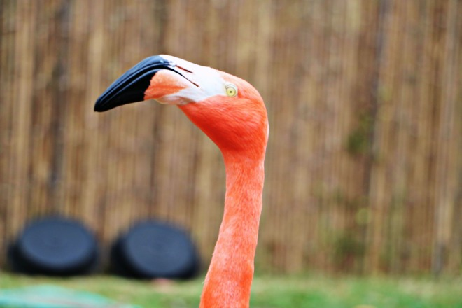 Flamingo Zoo