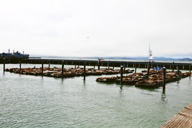 Pier 39 Wide