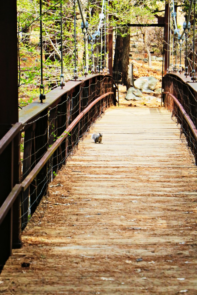 Squirel On the Bridge Claremont Meadows