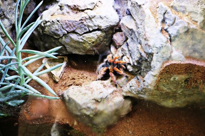 Tarantula Zoo